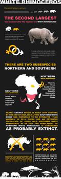 White Rhino Infographic