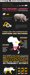 White Rhino Infographic by Aracama