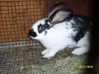 Rabbit 22 by balint2002