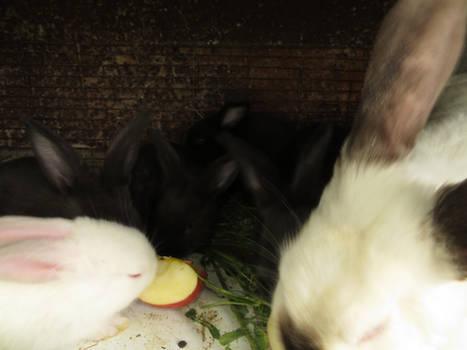 Little bunny 4