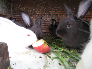 Little bunny 5