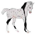 Foal 1