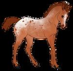 Foal 3