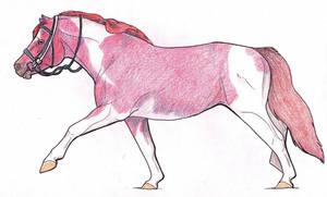 Pony Colada