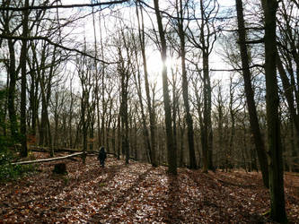 Winter Walk by ilinga