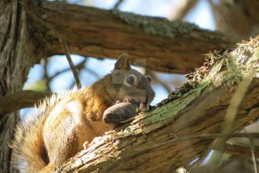 Sunshine Squirrel