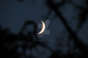 lunar auto-focus