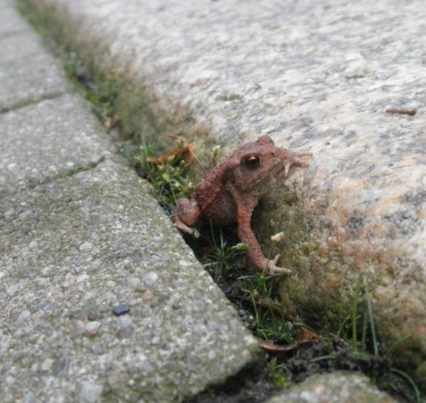 tiny walker by DaWonderer