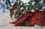 Hemi Cuda - Christmas Kitties 2016