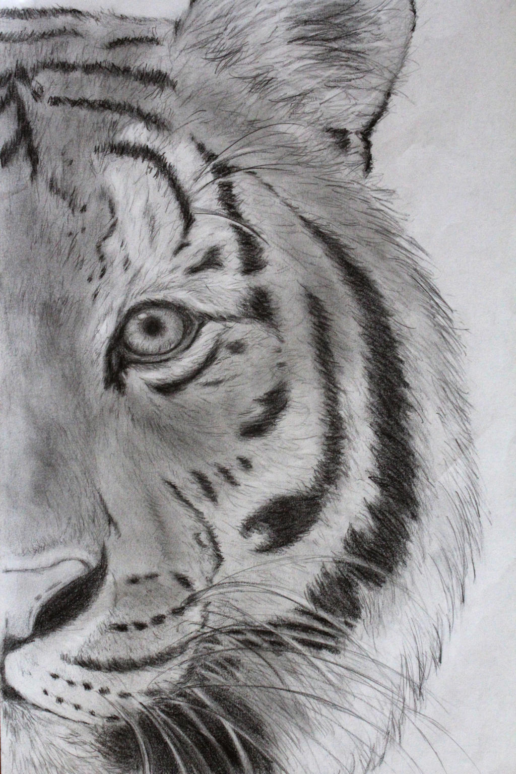 Old tiger drawing. by Maddie-Marie