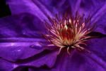 Dreams in Purple