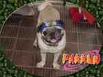 Pakkun is here