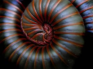 Toxic Curl