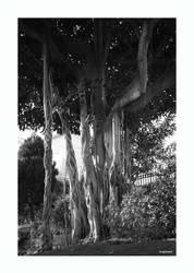 tree medley by imaj2mark