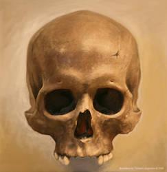 Skull still life by tobyvonkanobi
