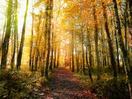 Golden Forest by ArtClem
