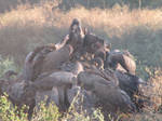Quarrel at the Table by Sabreleopard