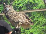 Eagle-Owl by Sabreleopard