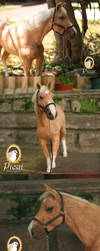 Needle Felted Criollo Horse v2 by PicuiDove