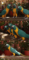 Three Blue-Throated Macaws (Ara glaucogularis)