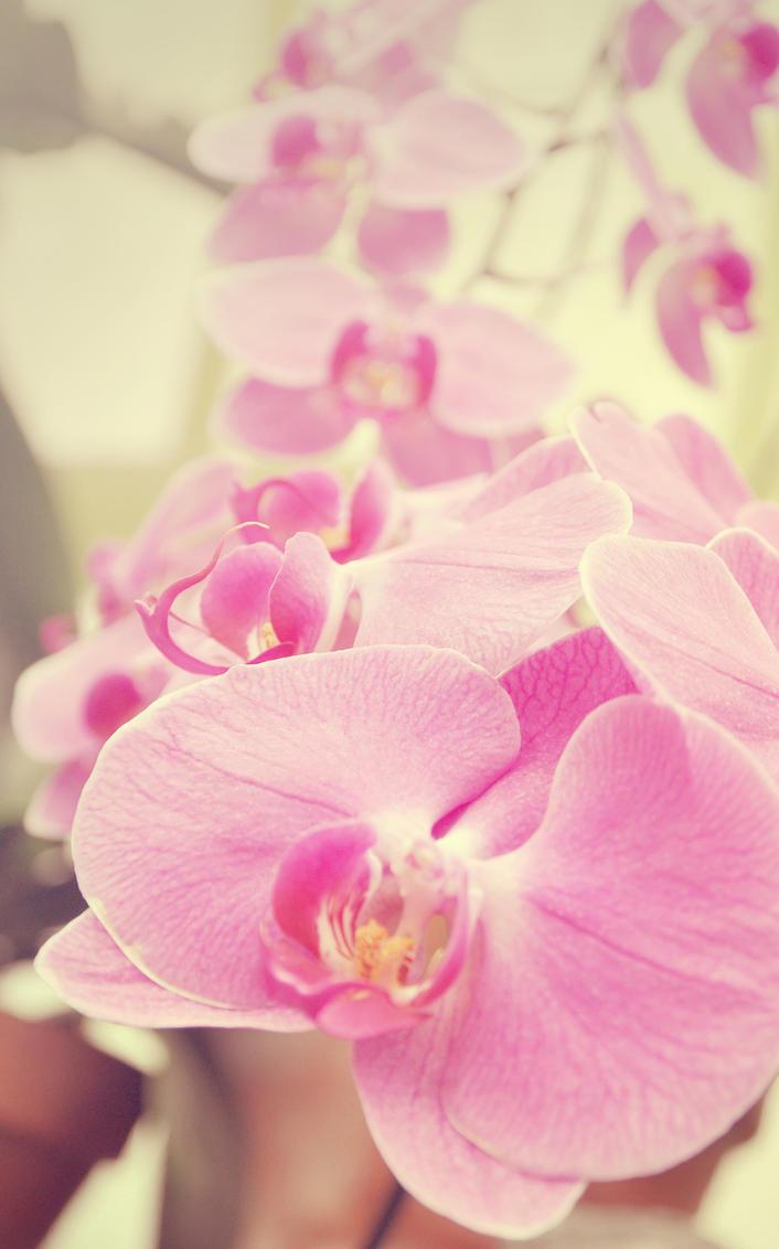 Fleurs. Passion_by_pictures_93-d3agfq9