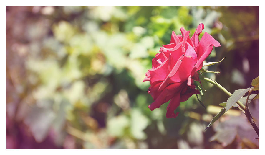 Fleurs. We_the_dreamers_by_pictures_93-d4xovy8