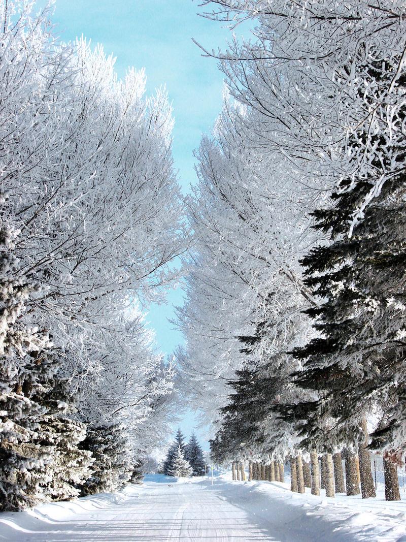 hoar frost path by Handie