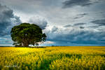 Rafiki's Tree