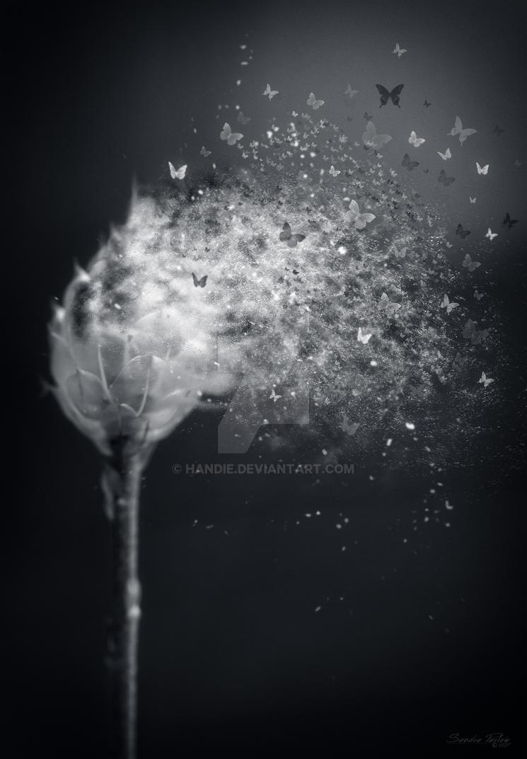 Flutter by Handie