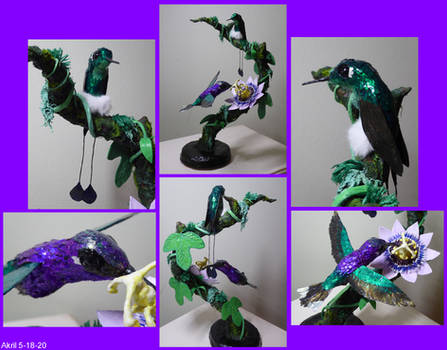 Violet Saberwing and Booted Racket-Tail