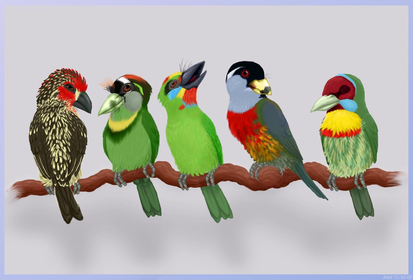 Five Barbets