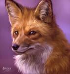 foxy fox - a quick study