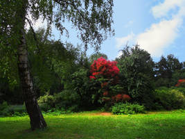 Crimson tree by Knjagna