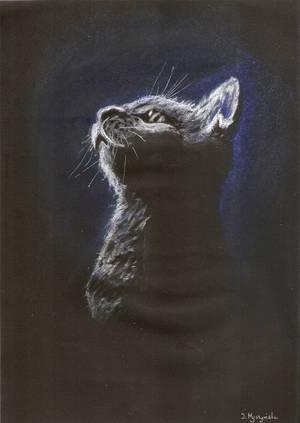 Cat in the dark by Zajka91