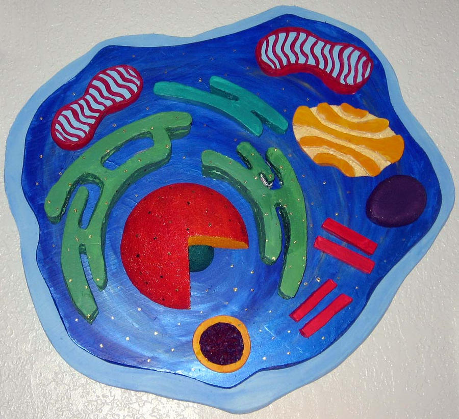 how to make an easy animal cell model