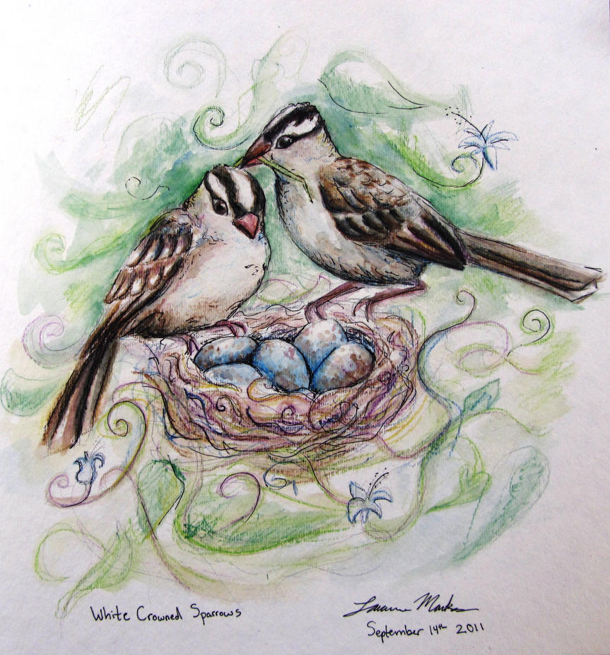 White Crowned Sparrow family by PonderosaPower