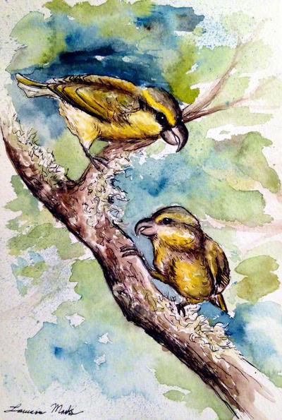 Maui Parrotbills by PonderosaPower