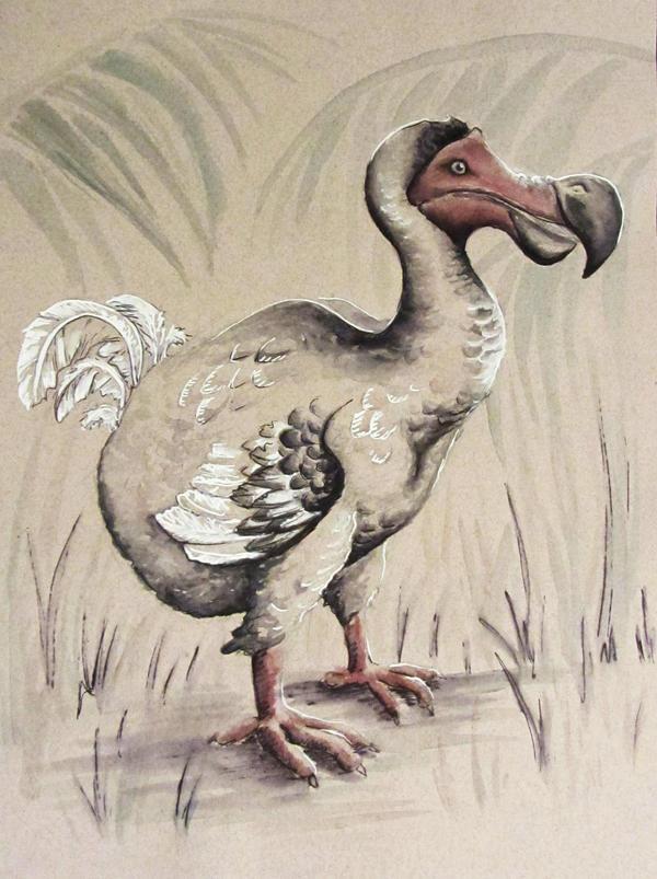 The Dodo by PonderosaPower