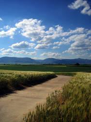 grain field by fanessa