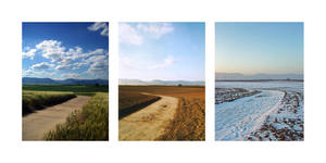 grain field III