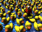 The great Rubber Ducky Race...