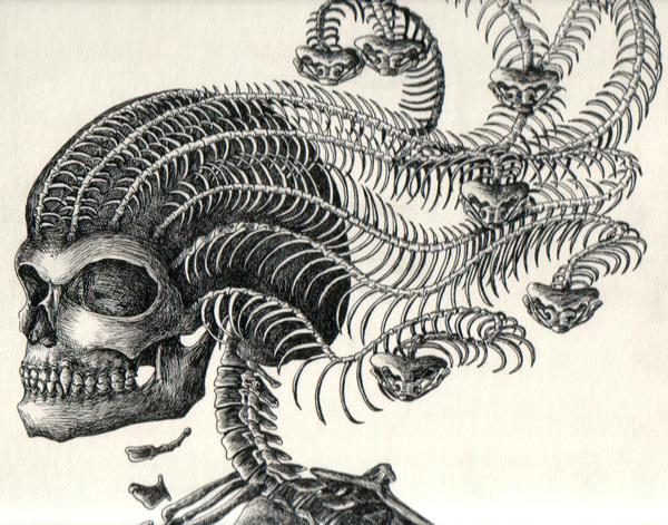 Medusa Skeleton by Tessarae