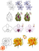 Flower reference by Namwhan-K