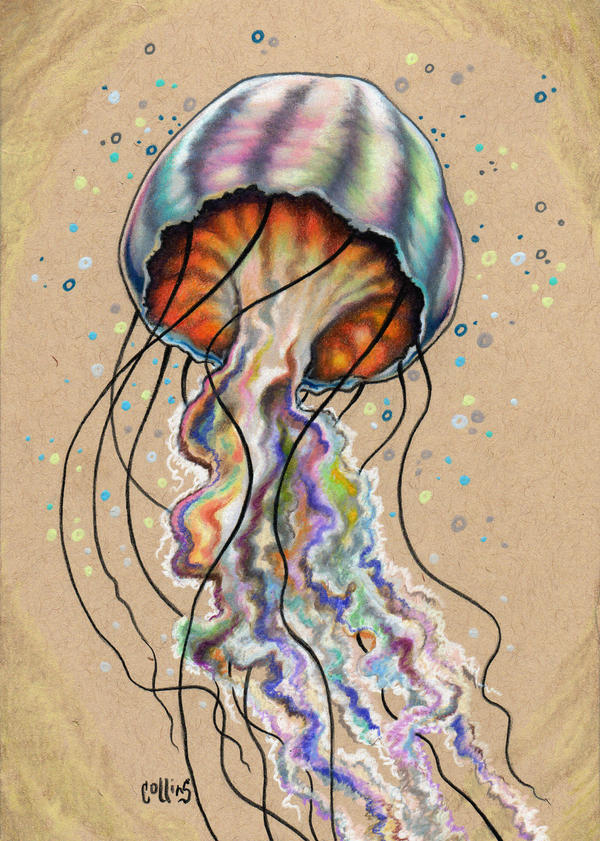 Jellyfish by bryancollins
