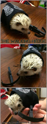 The Walking Hedge