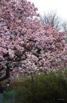 Rainy Spring Day by TreePruitt