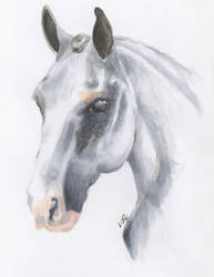 Horse 3 of 3