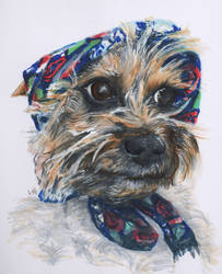 Dog in a headscarf