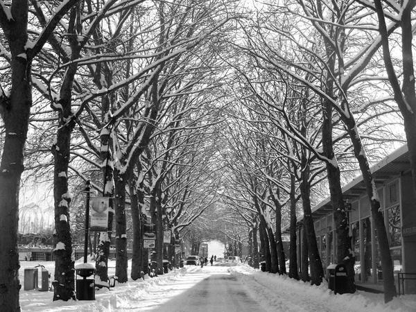 Seattle Snow Storm by aliengirl31186