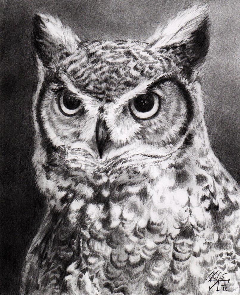 Owl by Idolum
